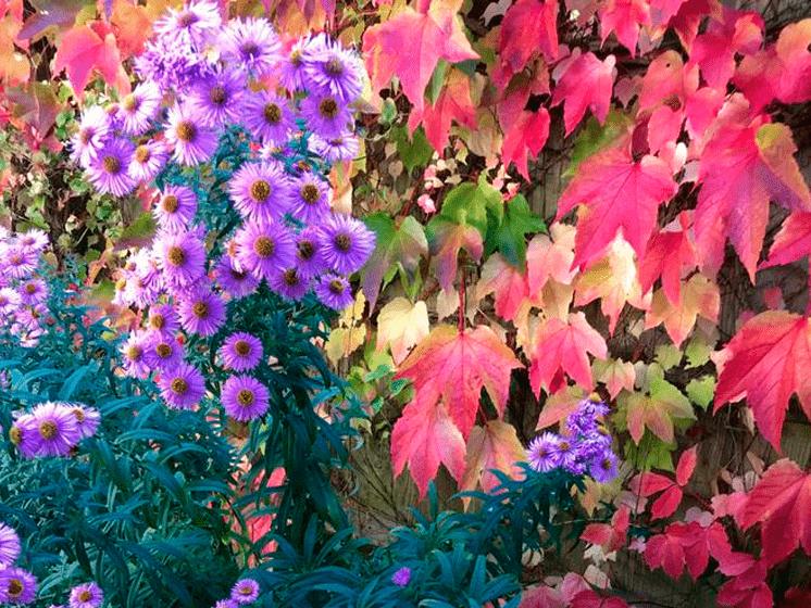 Los secretos imprescindibles para cuidar el jardín en otoño