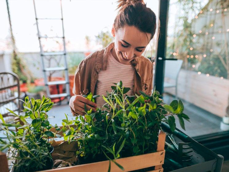 Jardinear; Los beneficios de rodearse de plantas en el hogar.