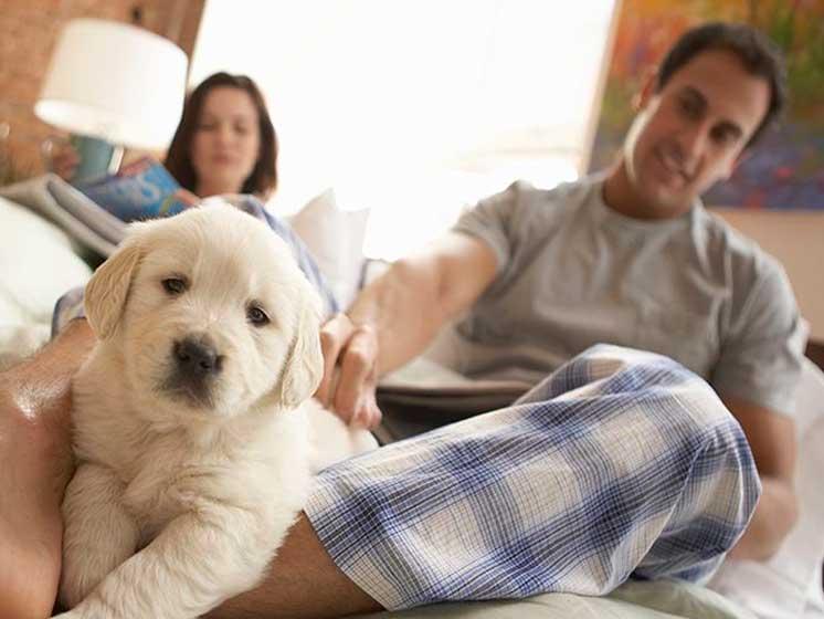 ¿Nuevos amigos en el hogar? claves para recibir a tu nueva mascota en casa