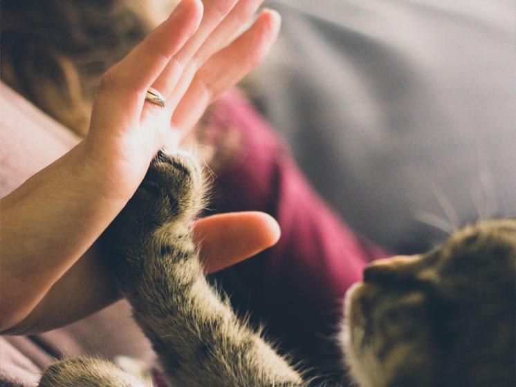 12 tips para convivir con una mascota en tu hogar.