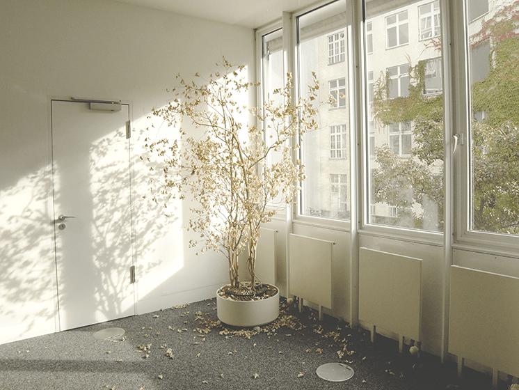 ¿Cómo cuidar las plantas de tu casa o departamento en otoño?