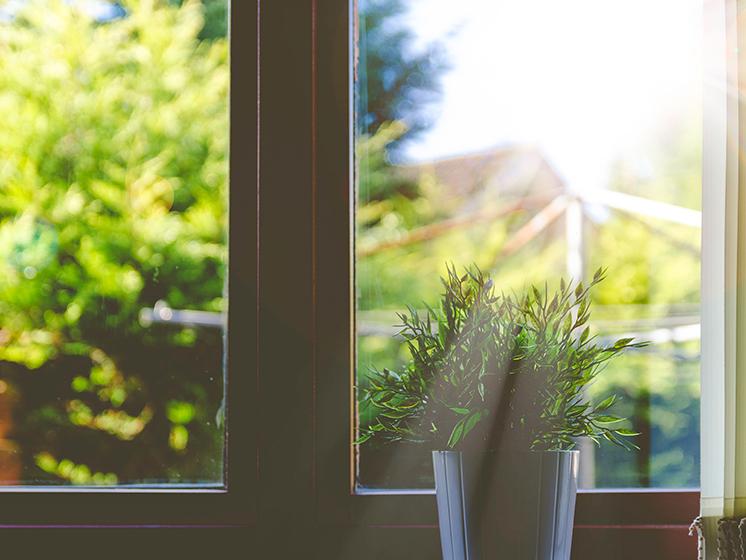 ¿Cómo cuidar las plantas de tu casa o departamento en verano?